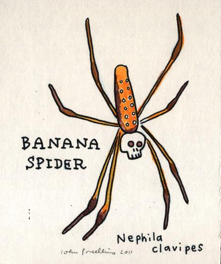 JohnP-BananaSpider.jpg