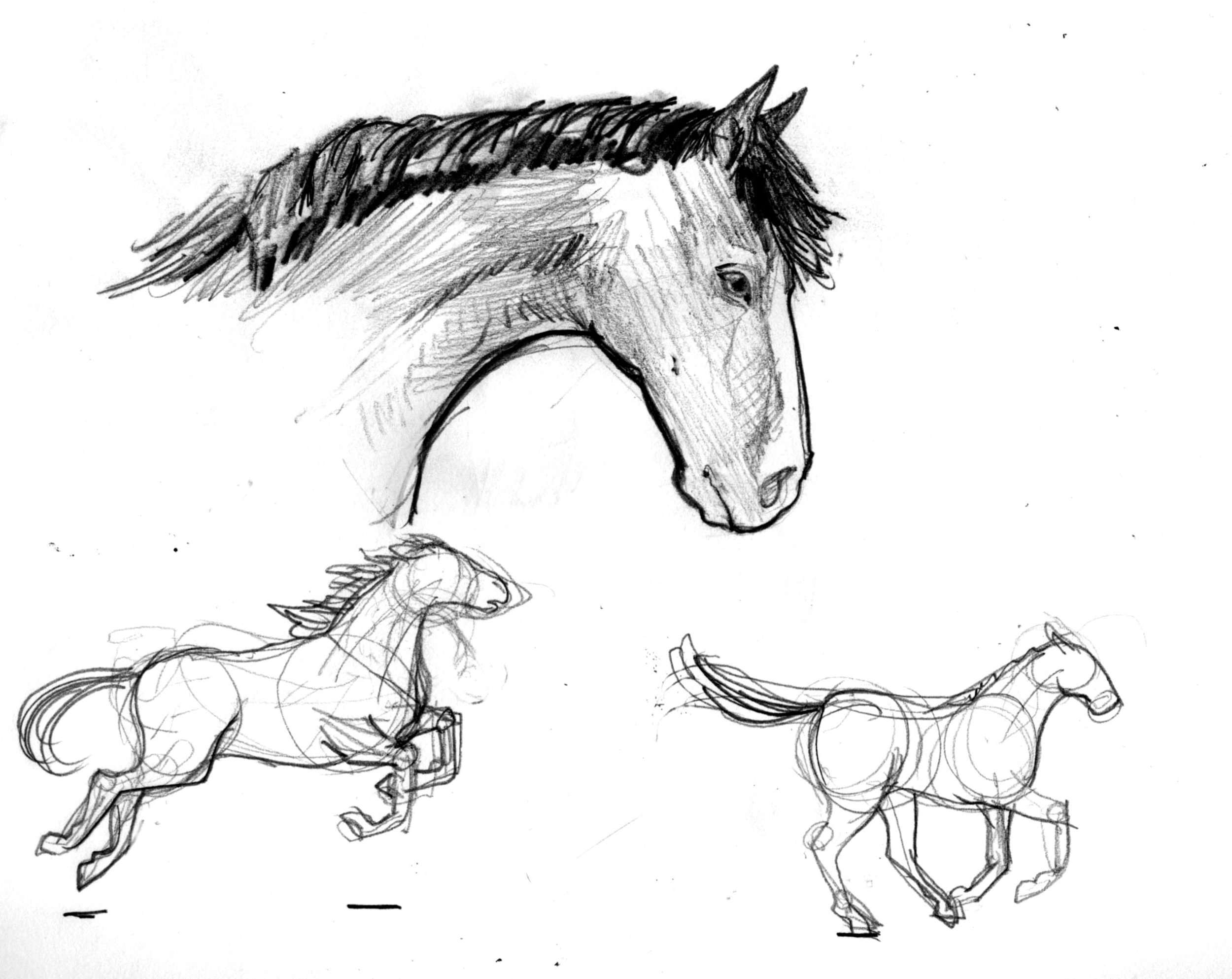 horse02.jpeg