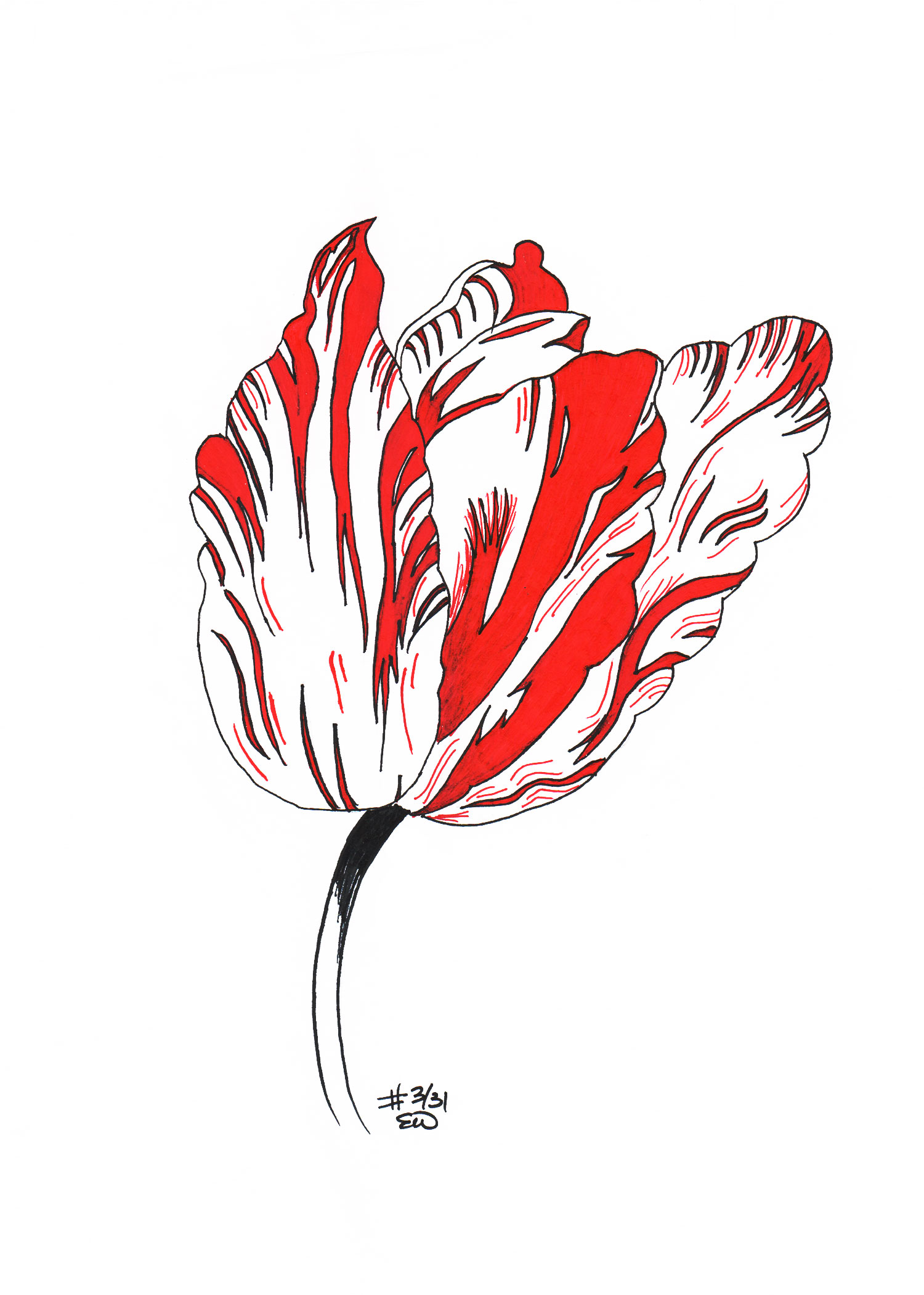 TulipClean.jpg
