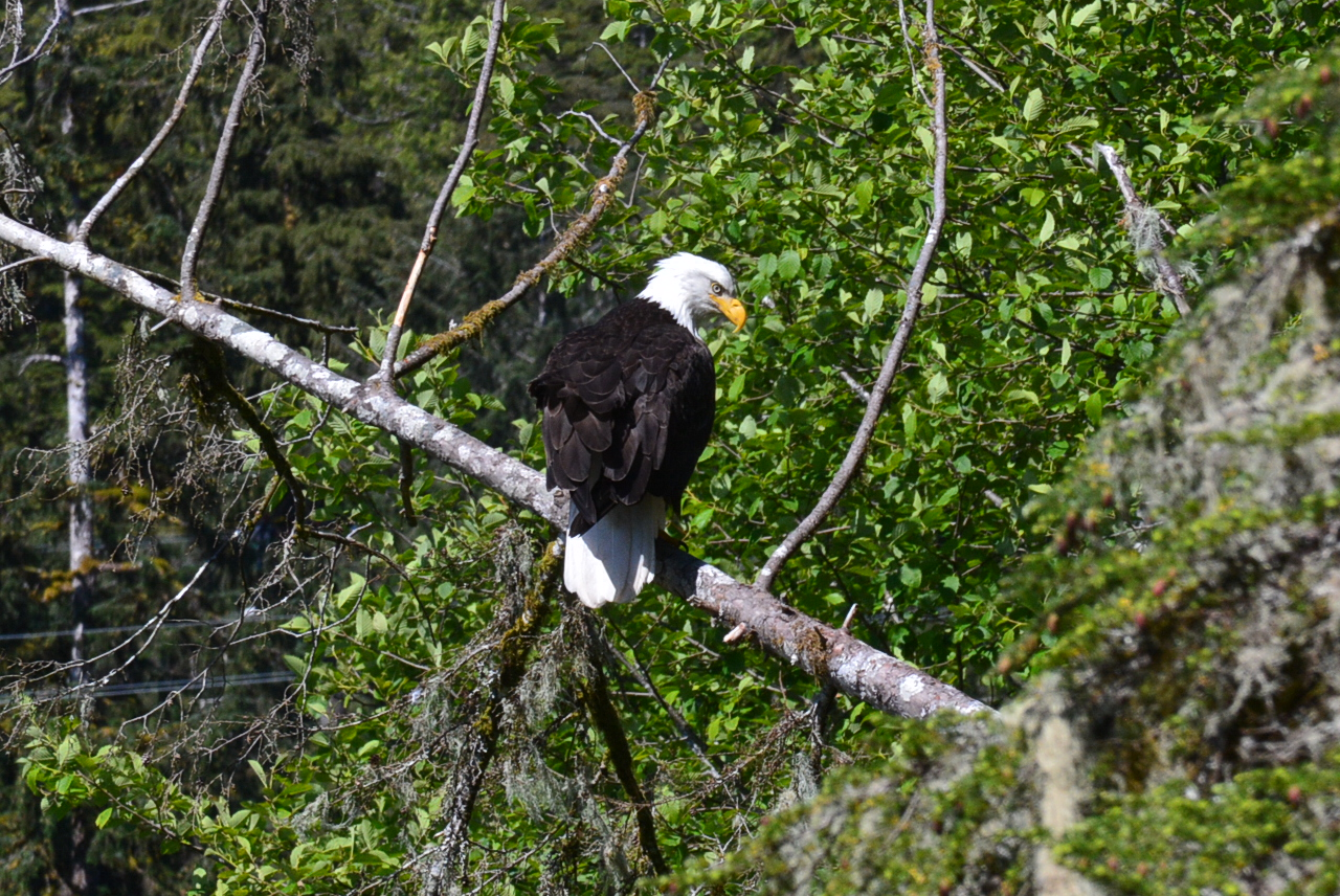 One of many eagles we saw.