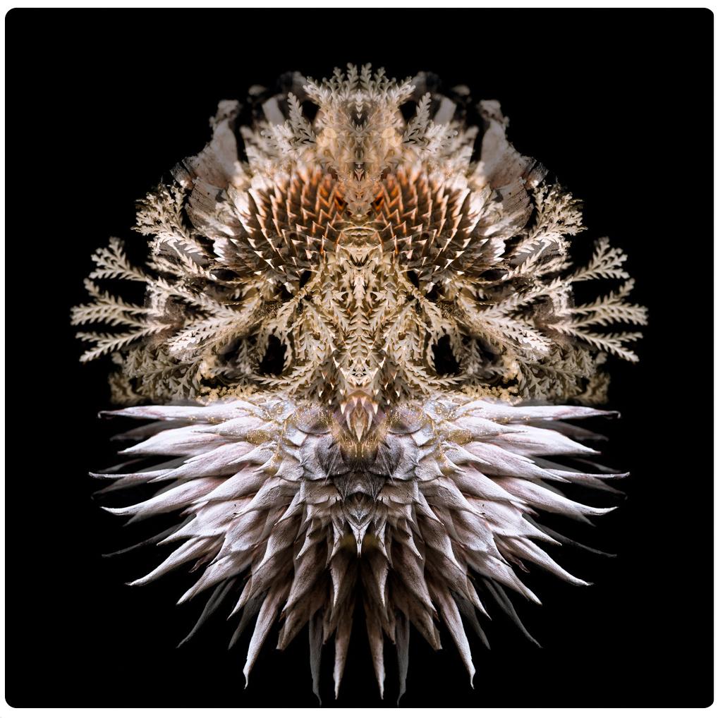 aqualibrium.jpg