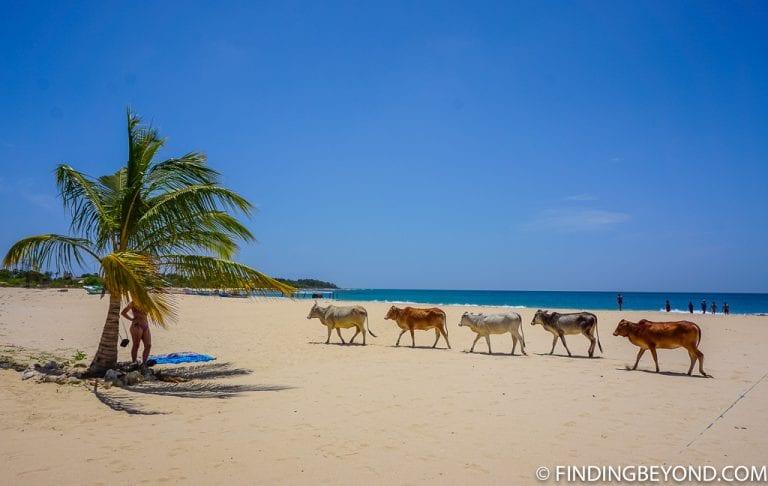 Kalkudah beach, a beautiful white sand beach.