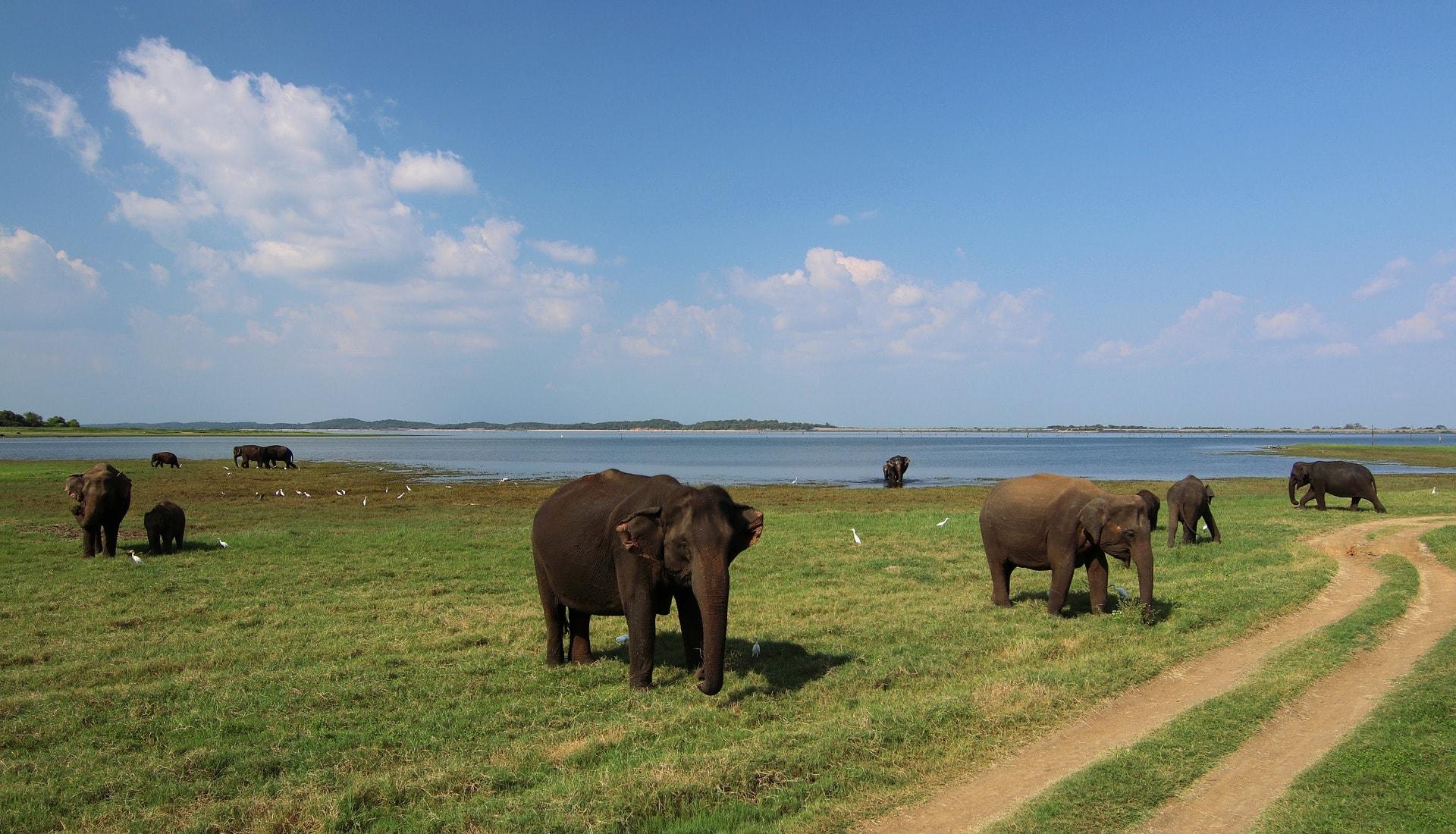Sri Lanka itinerary national park-min.jpg