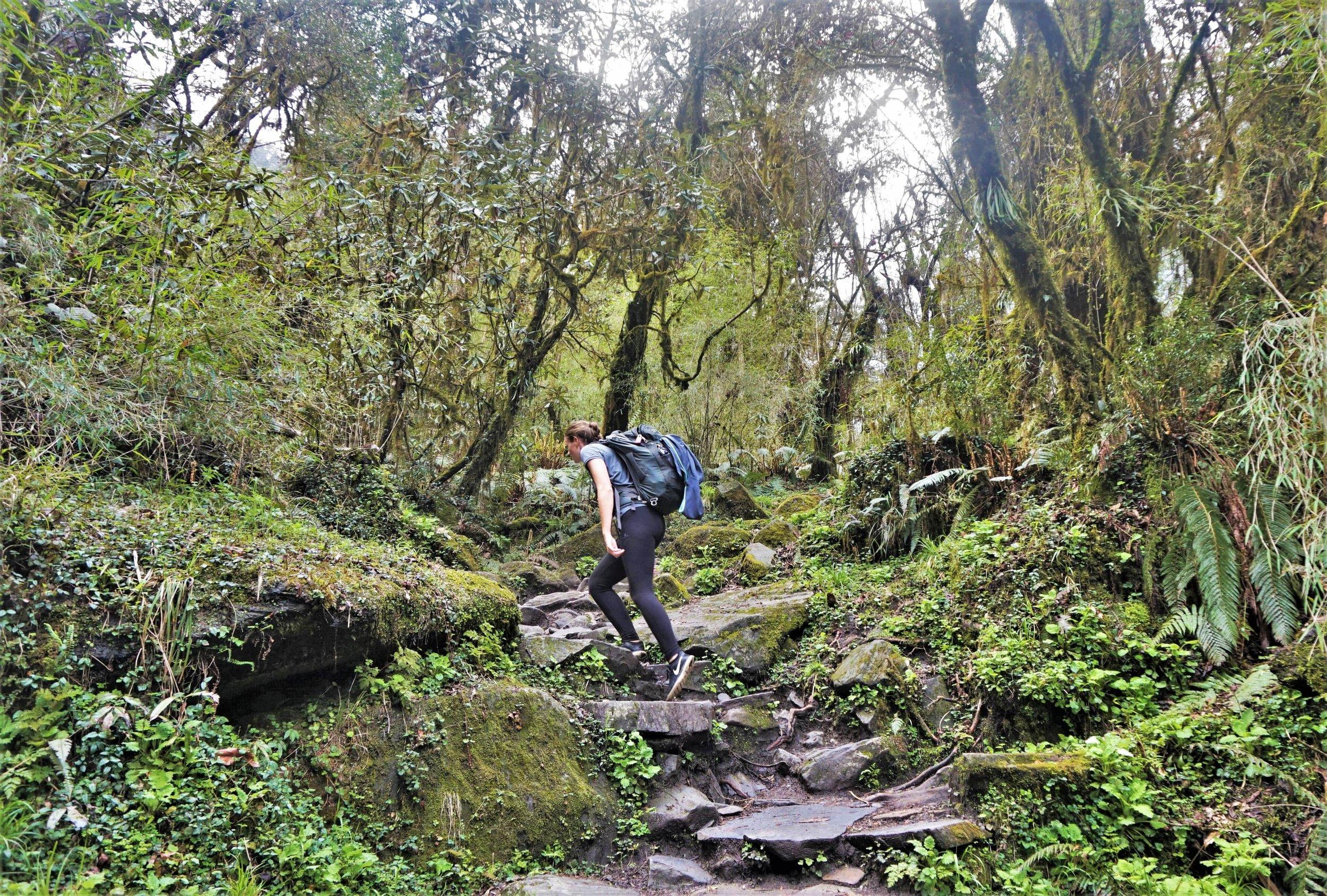 Amazing lush vegetation at the beginning of the Annapurna trek