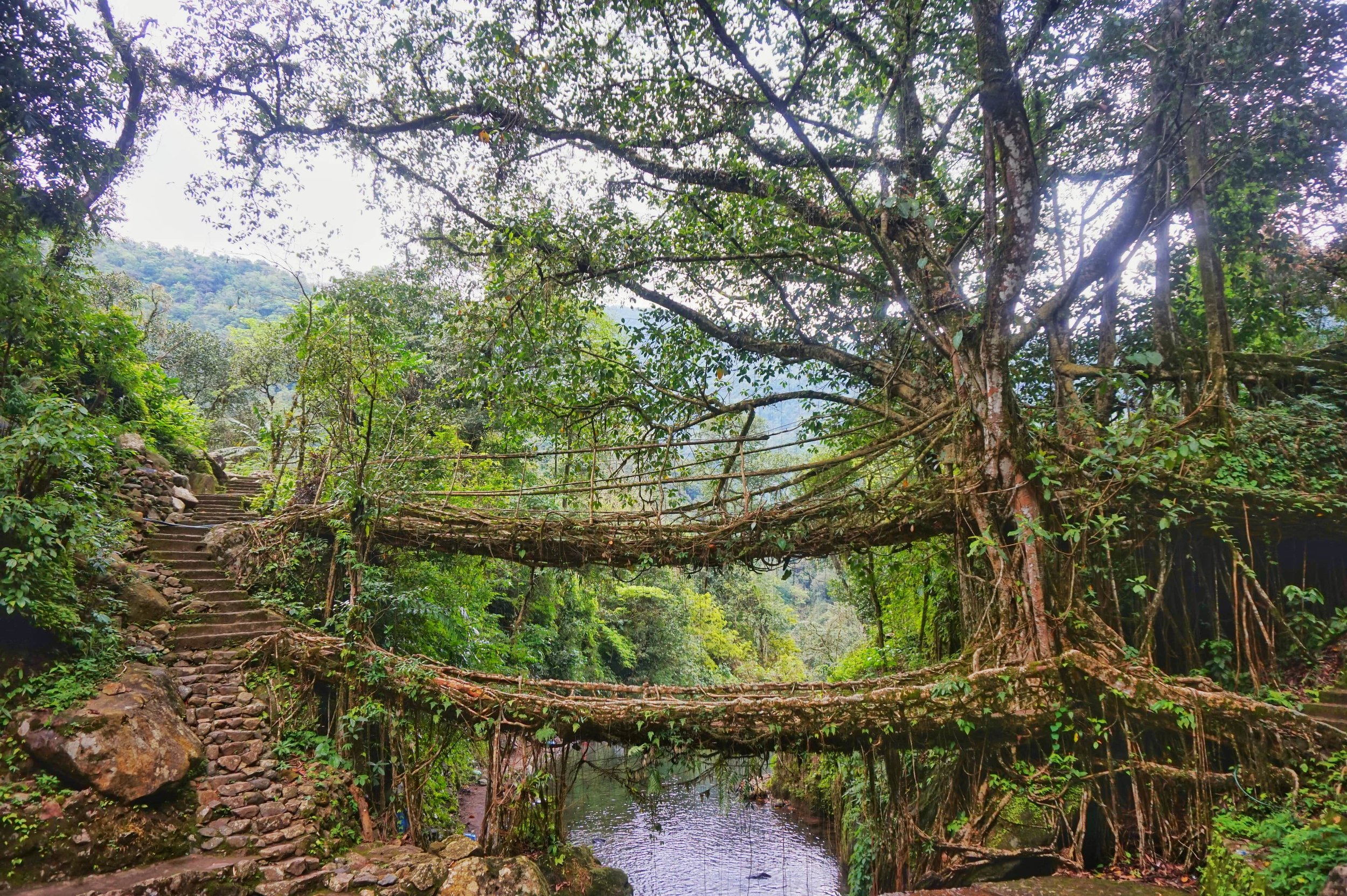 The biggest attraction in Meghalaya are the living root bridges in the jungle in Nongriat. The root bridges are a must visit place while backpacking in Meghalaya.