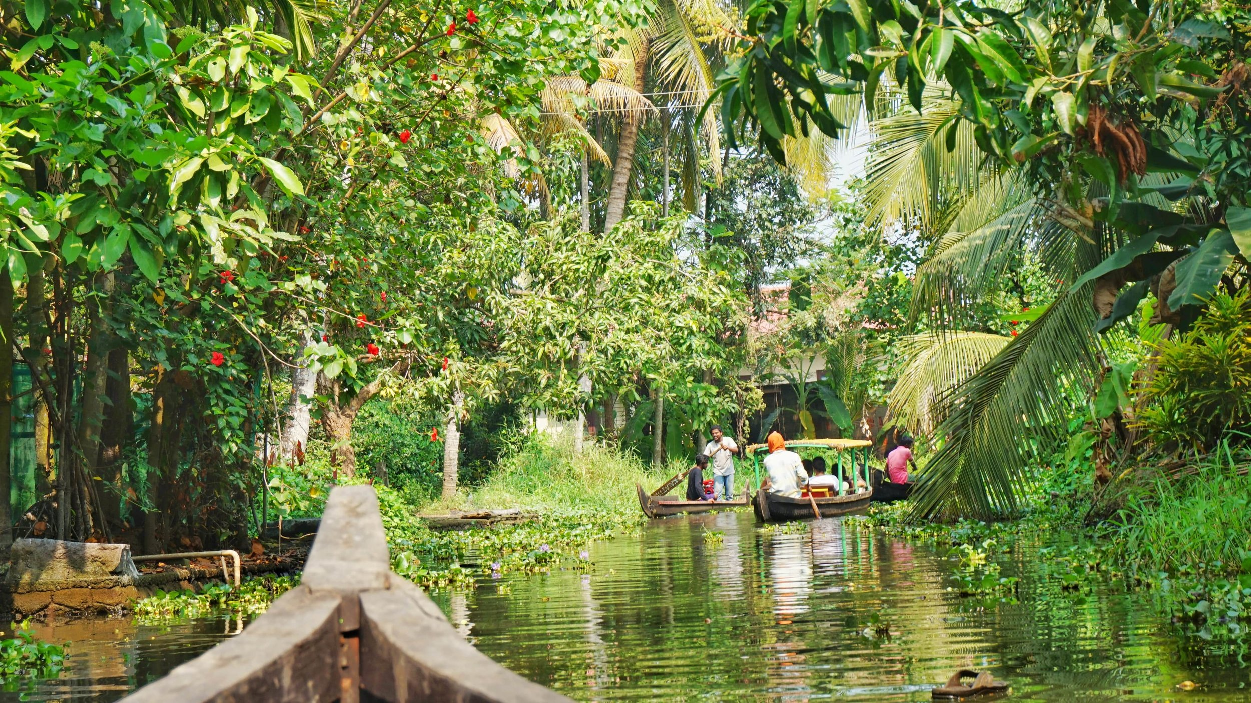 Lush greenery and small canals on the best Alleppey backwater tour by canoe. Backwaters of Kerala.