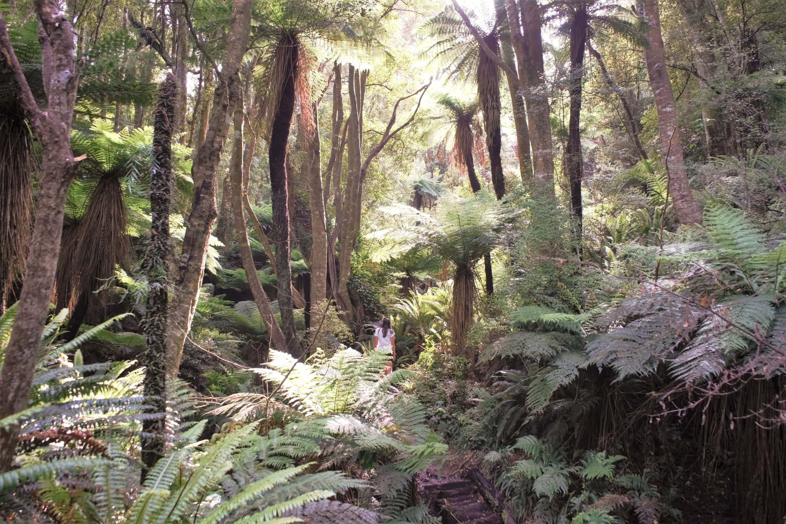 The bush walks are one of the best things to do in the Catlins.
