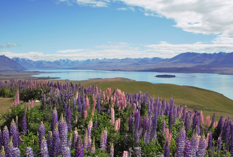 Road Map Of New Zealand South Island.Choose Your Perfect South Island Road Trip Itinerary 4 Routes With