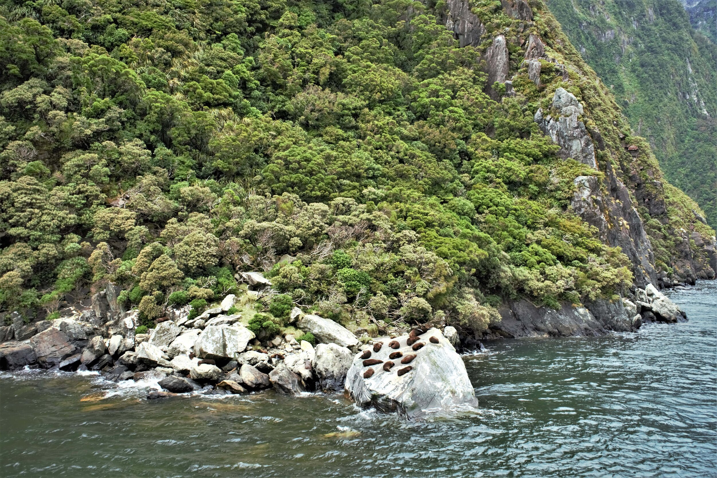 Milford Sound Backpackers Guide