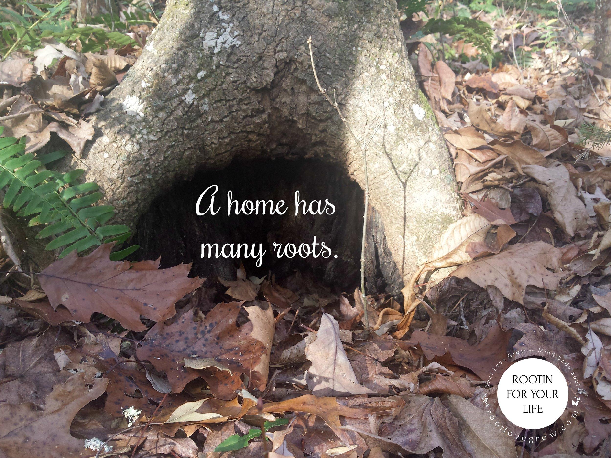 many roots.jpg