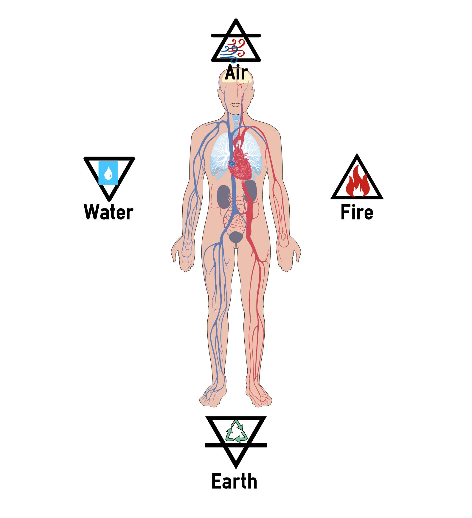 body traits.png