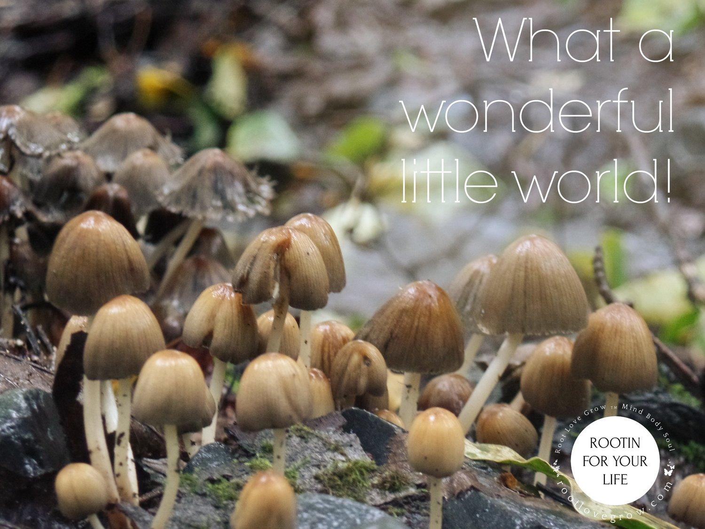 mushroom+city2.jpg