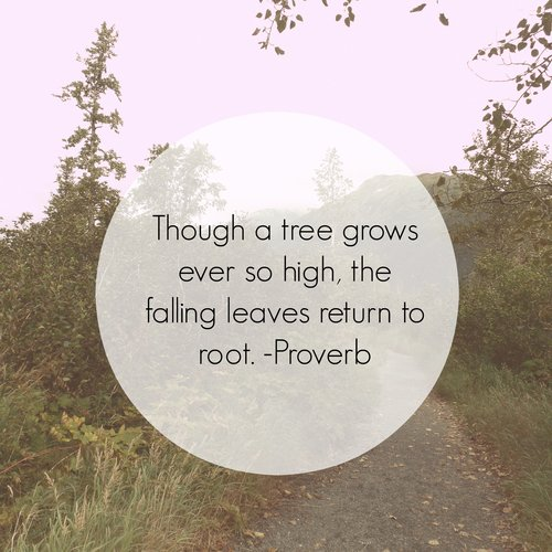 falling roots.jpg