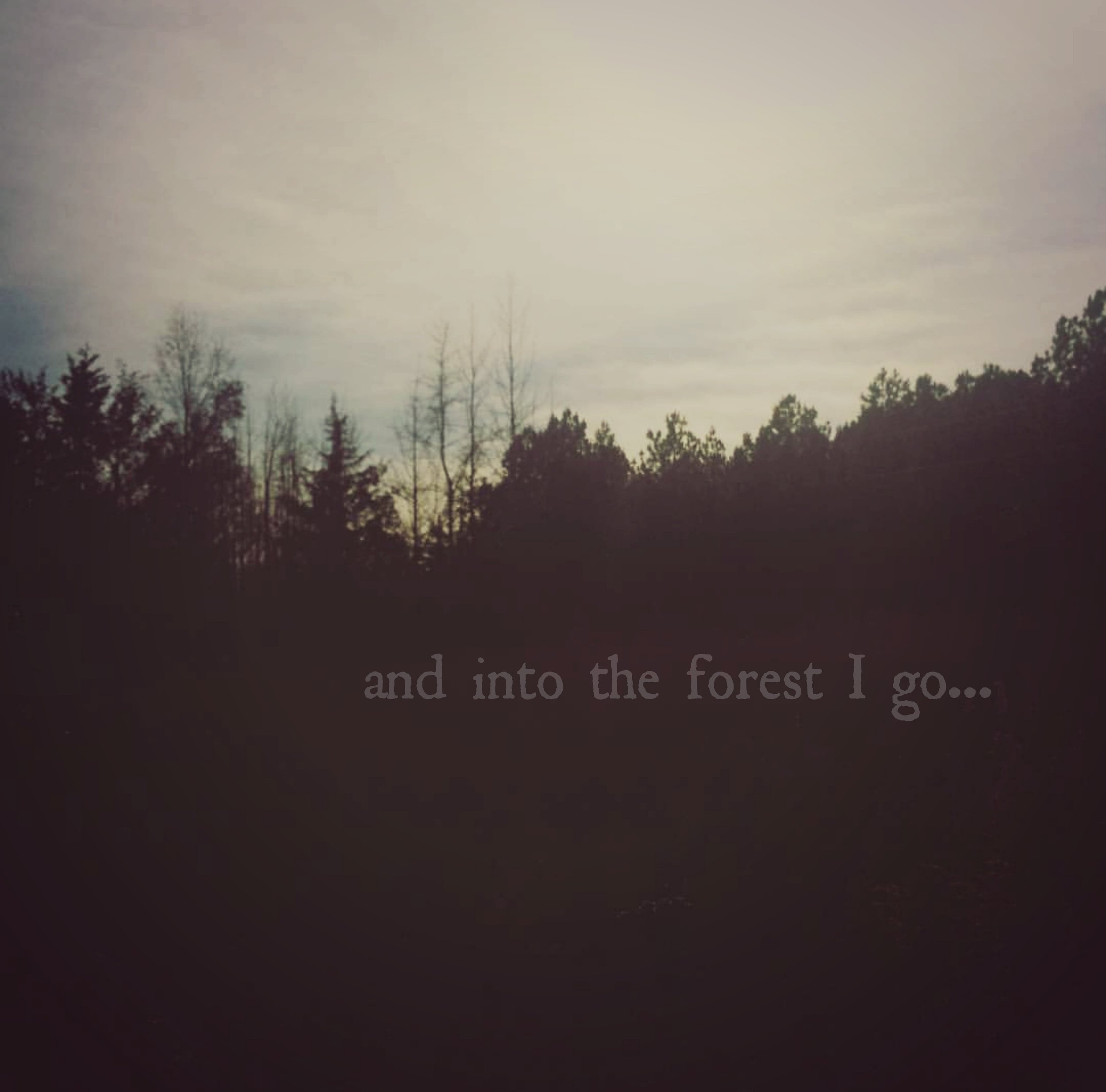 into the forest med.jpg