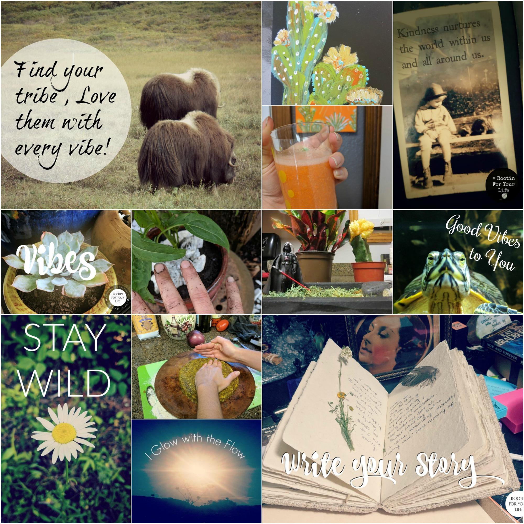 newsletter collage.jpg