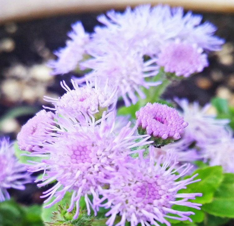 purple+flower+power.jpg
