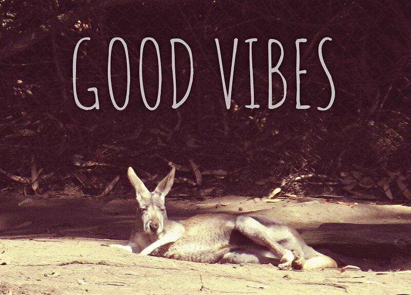 good+vibes+kangaroo+small.jpg