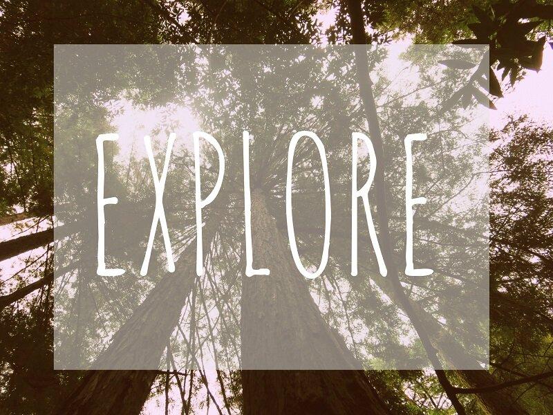 explore+trees+small.jpg