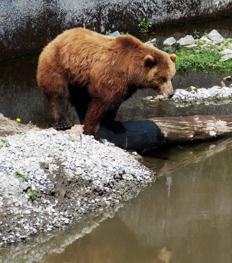 bear+reflections+tall+small.jpg