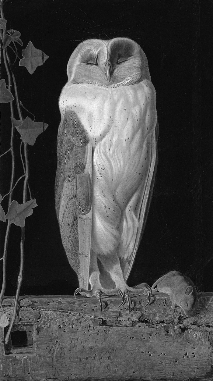 William James Webbe,  The White Owl