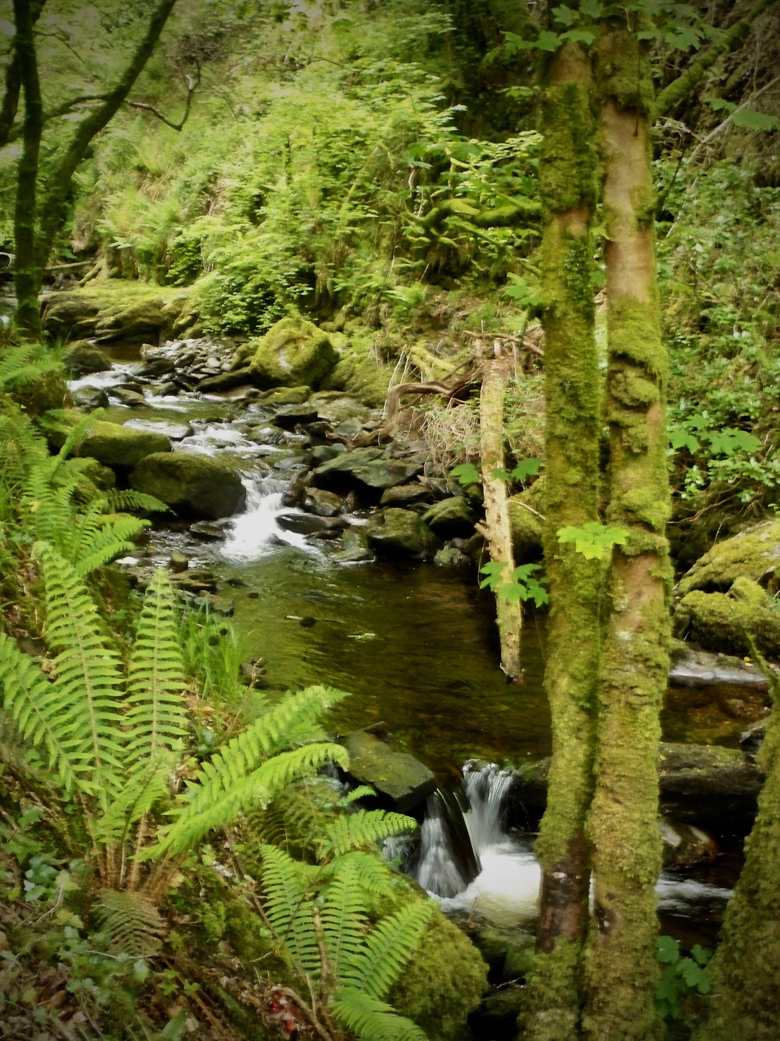 Killarney National Park ~ Ireland