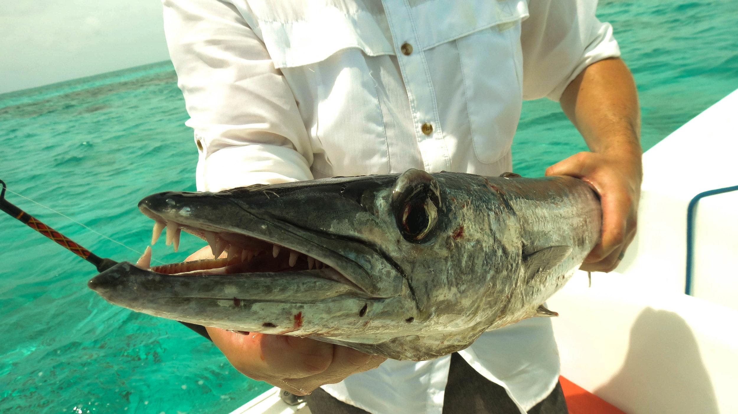 Deep Sea Fishing ~ Coco Plum Island Resort ~ Belize