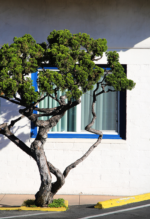 Fine Art Tree .jpg