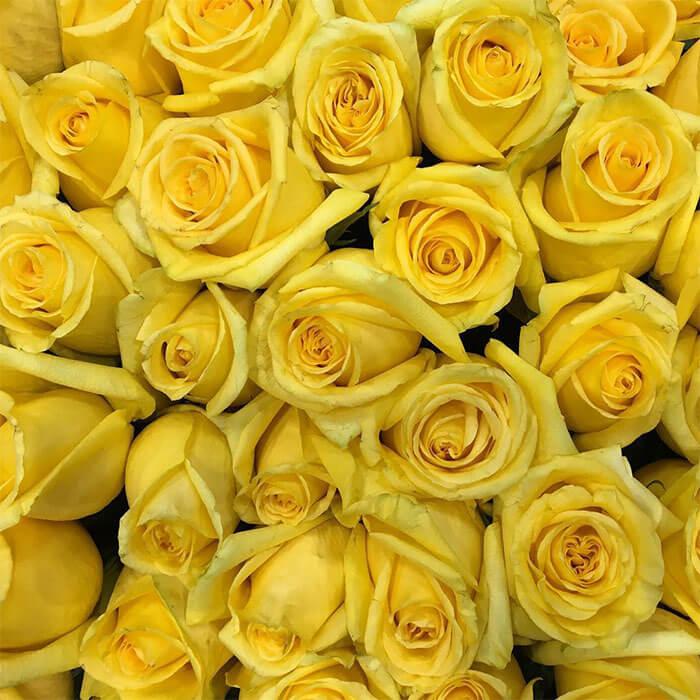 VivaRoses Bucket o' Sunshine Bouquet