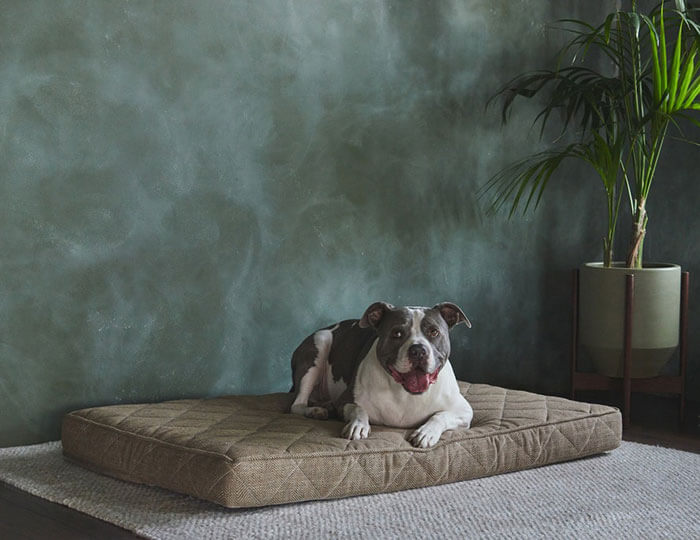 Brentwood Home Griffith Pet Bed