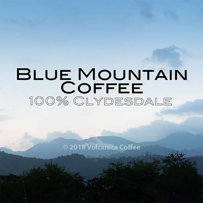 Volcanica Blue Mountain Clydesdale Coffee