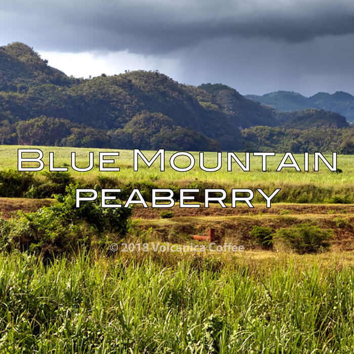 Volcanica Blue Mountain Peaberry Coffee