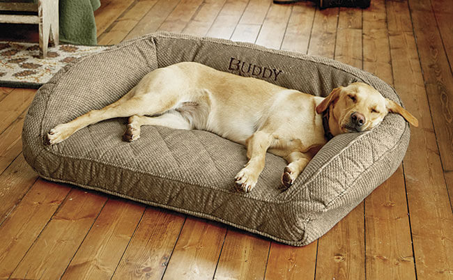 Orvis Memory Foam Bolstered Dog Bed