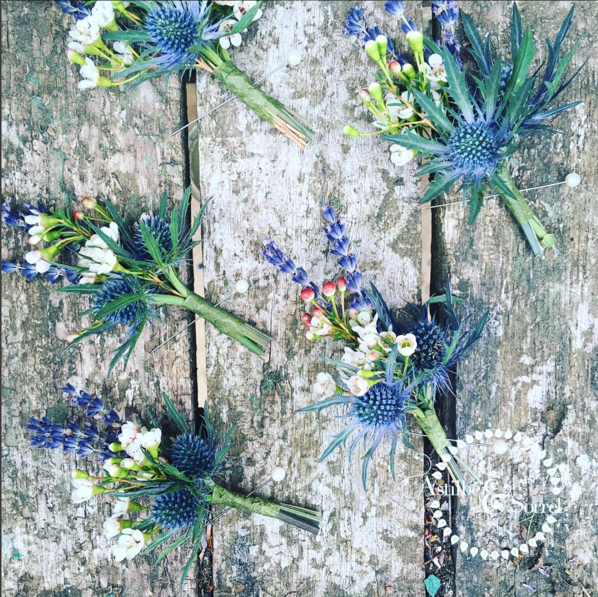 Waxflower, Lavender and Eryngium Rustic Buttonholes