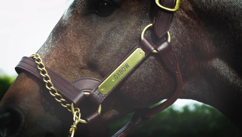 Oxbow-CloseUp1 - @Calumet Farm Bourbon Whiskey