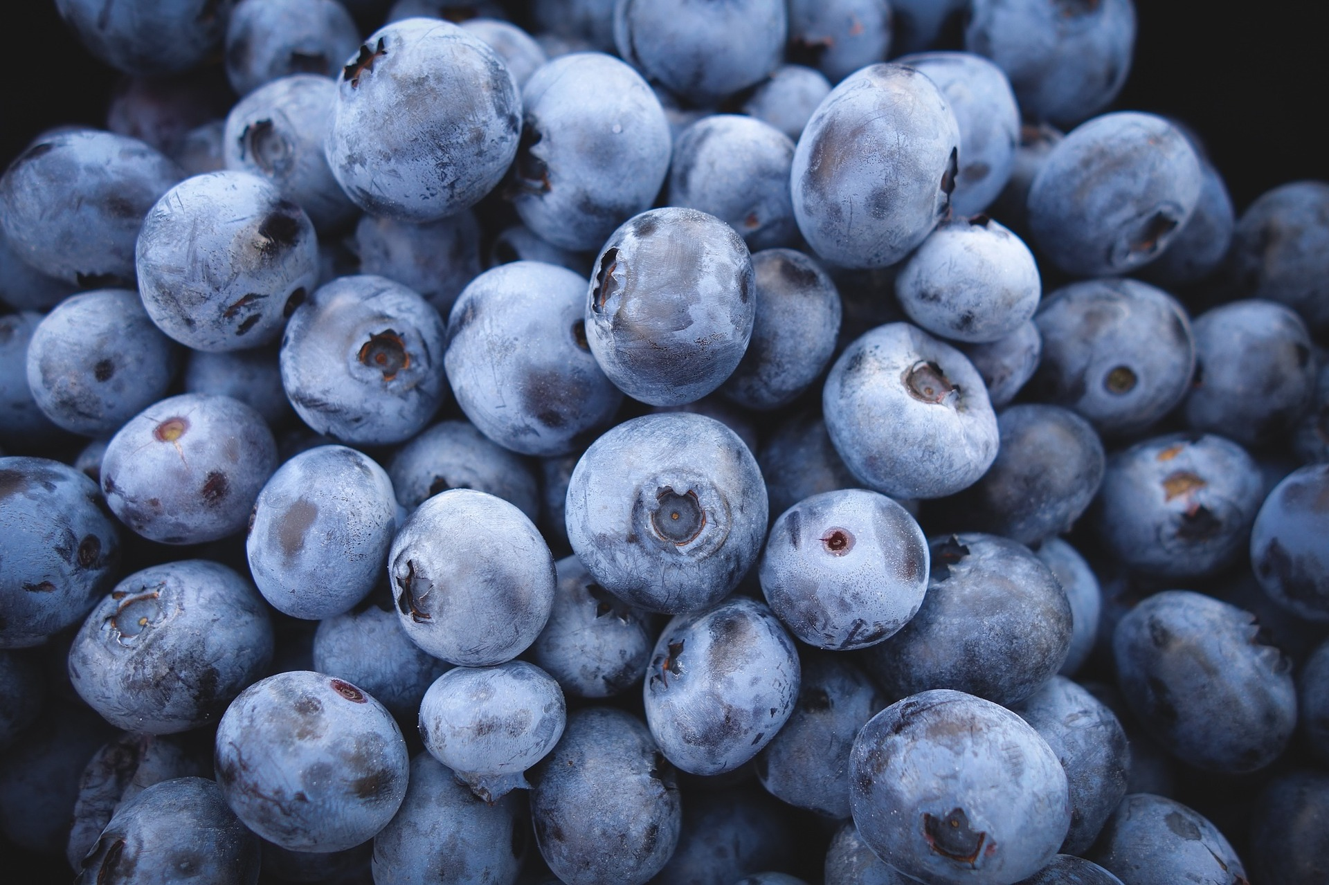 Paupack Blueberry Farm:  184 Gumbletown Road, Paupack, PA 18451   (570) 226-9702