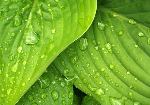 water on leaves - dew.jpeg