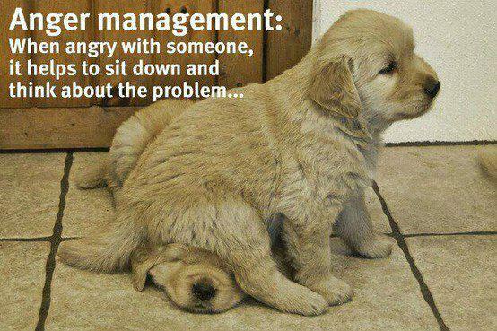 Golden puppies.jpeg