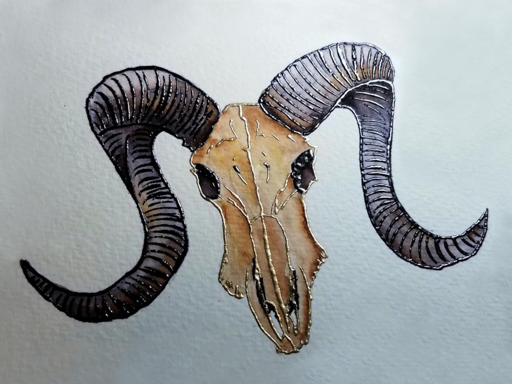 !4embossed ram skull watercolor34.jpg