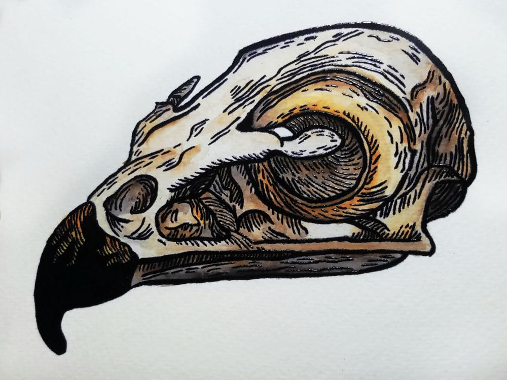 !4Micha Lessard-Embossed Watercolor Hawk Skull.jpg