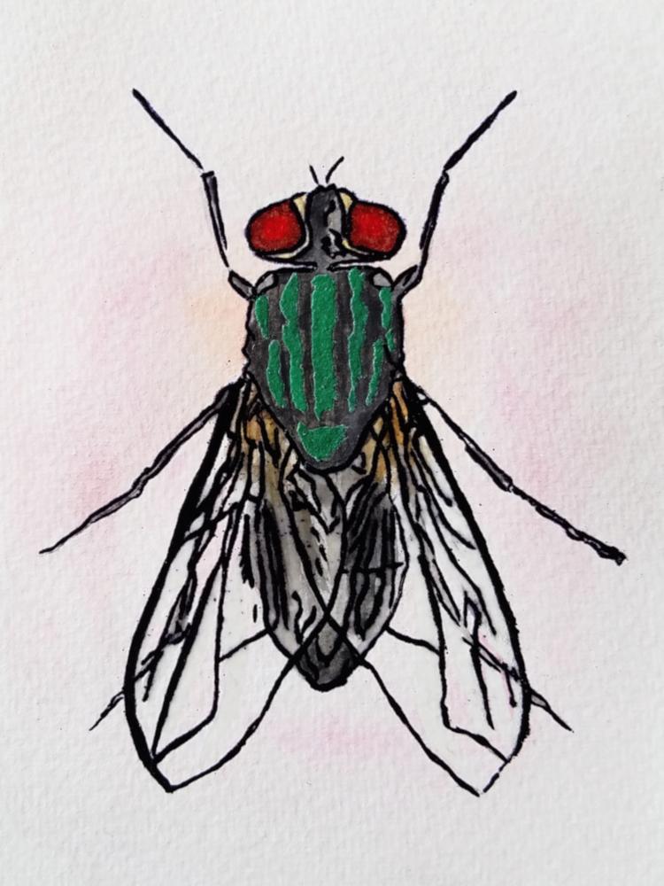!4watercolor fly1.jpg
