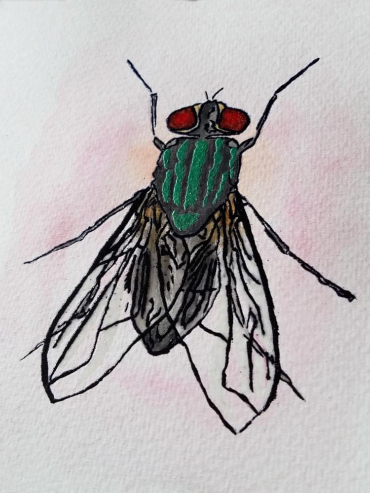 !4watercolor fly2.jpg