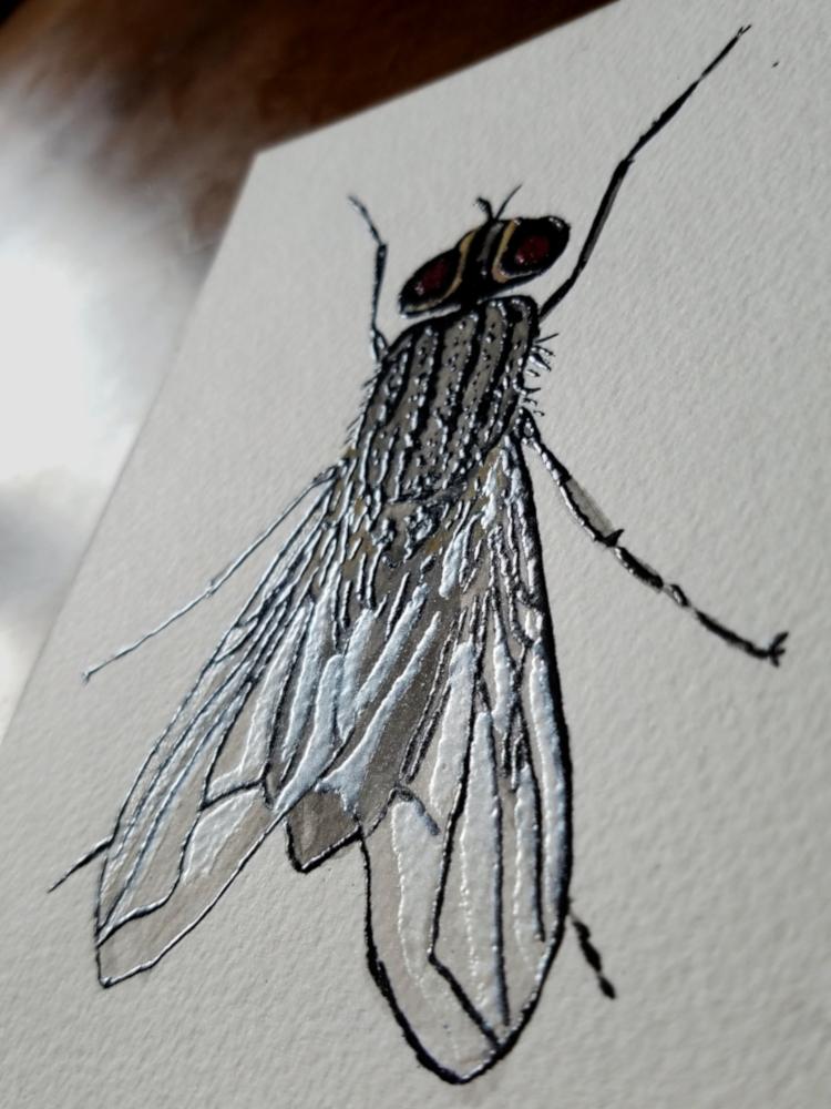 !4watercolor fly4.jpg