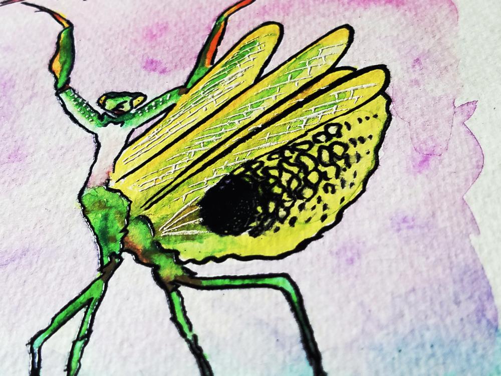 !4watercolor solar sysyem.jpg4embossed mantis watercolor2.jpg