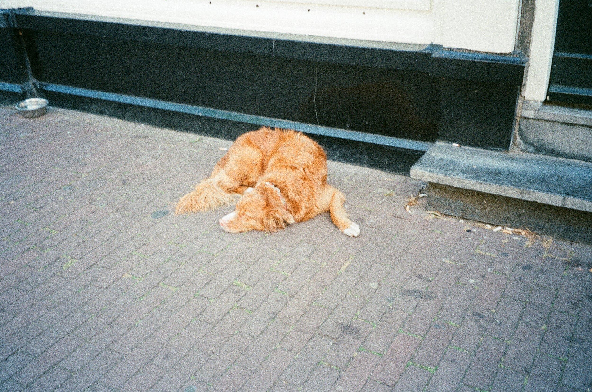 Amsterdam, August 2018
