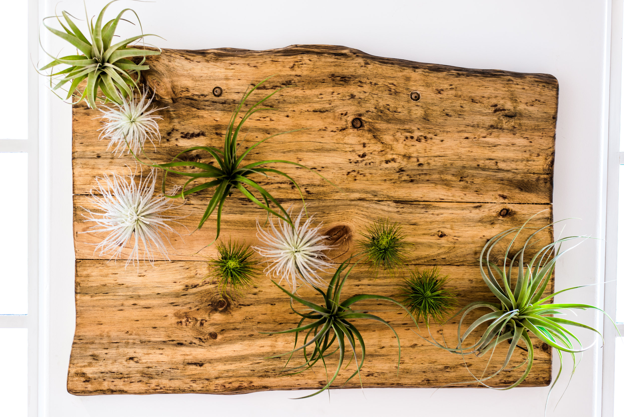 2_Tillandsia_Wood_Business_EL.jpg