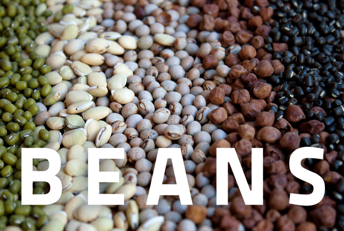 beans-2.png