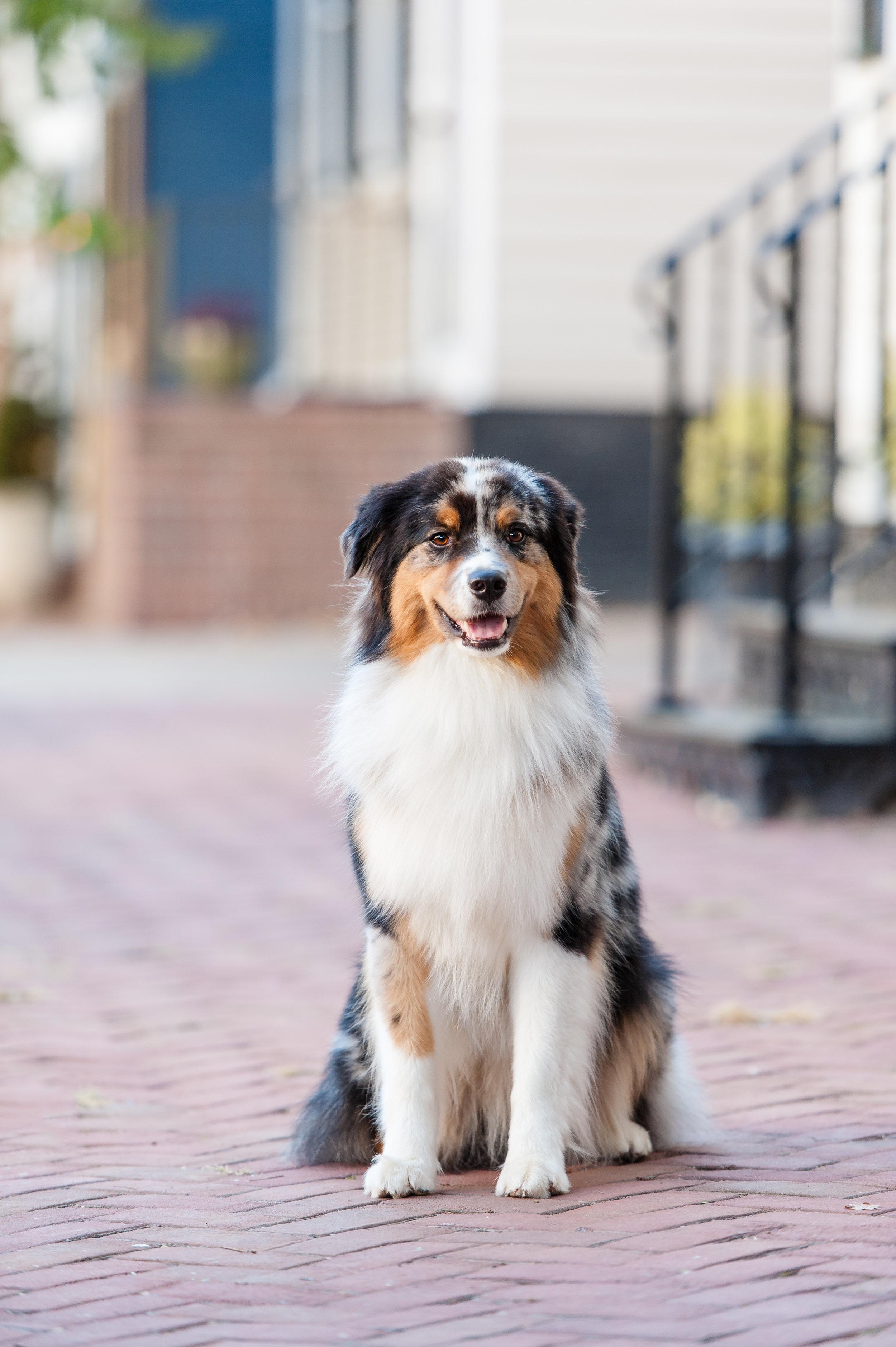 austin dog photographer (1 of 1)-2.JPG