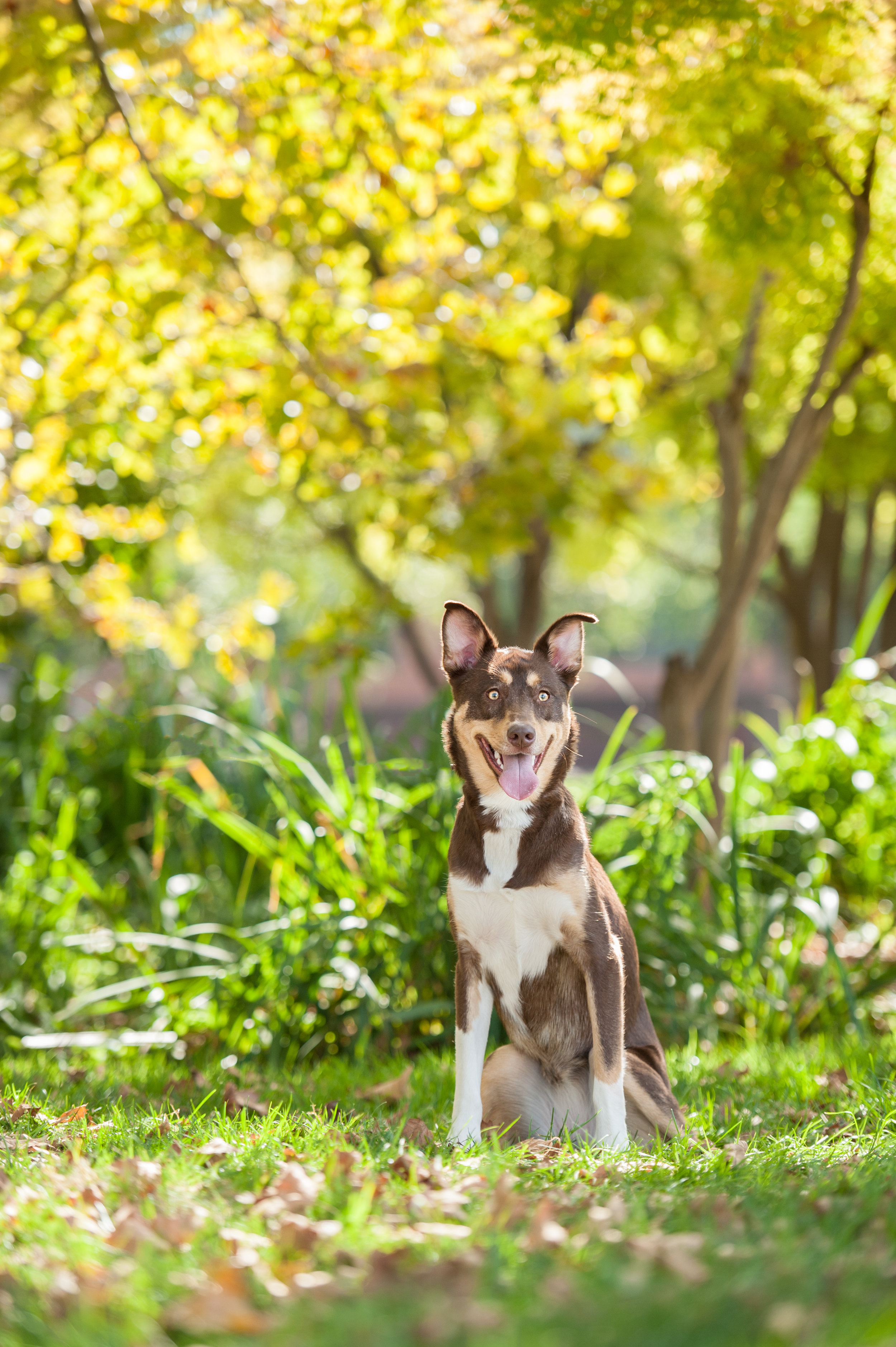 austin dog photographer (1 of 1).JPG
