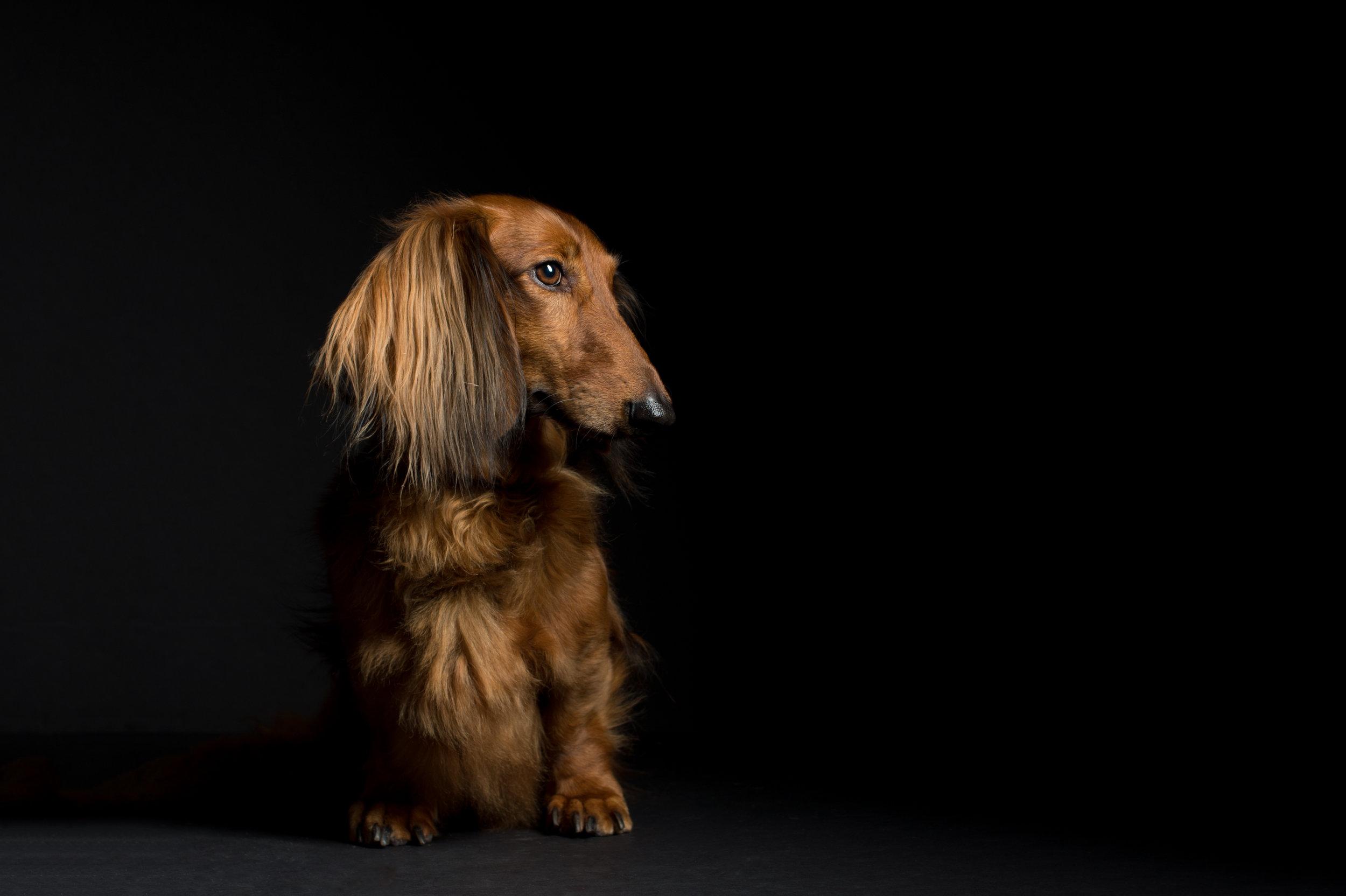 austin dog photographer (1 of 1)-8.JPG