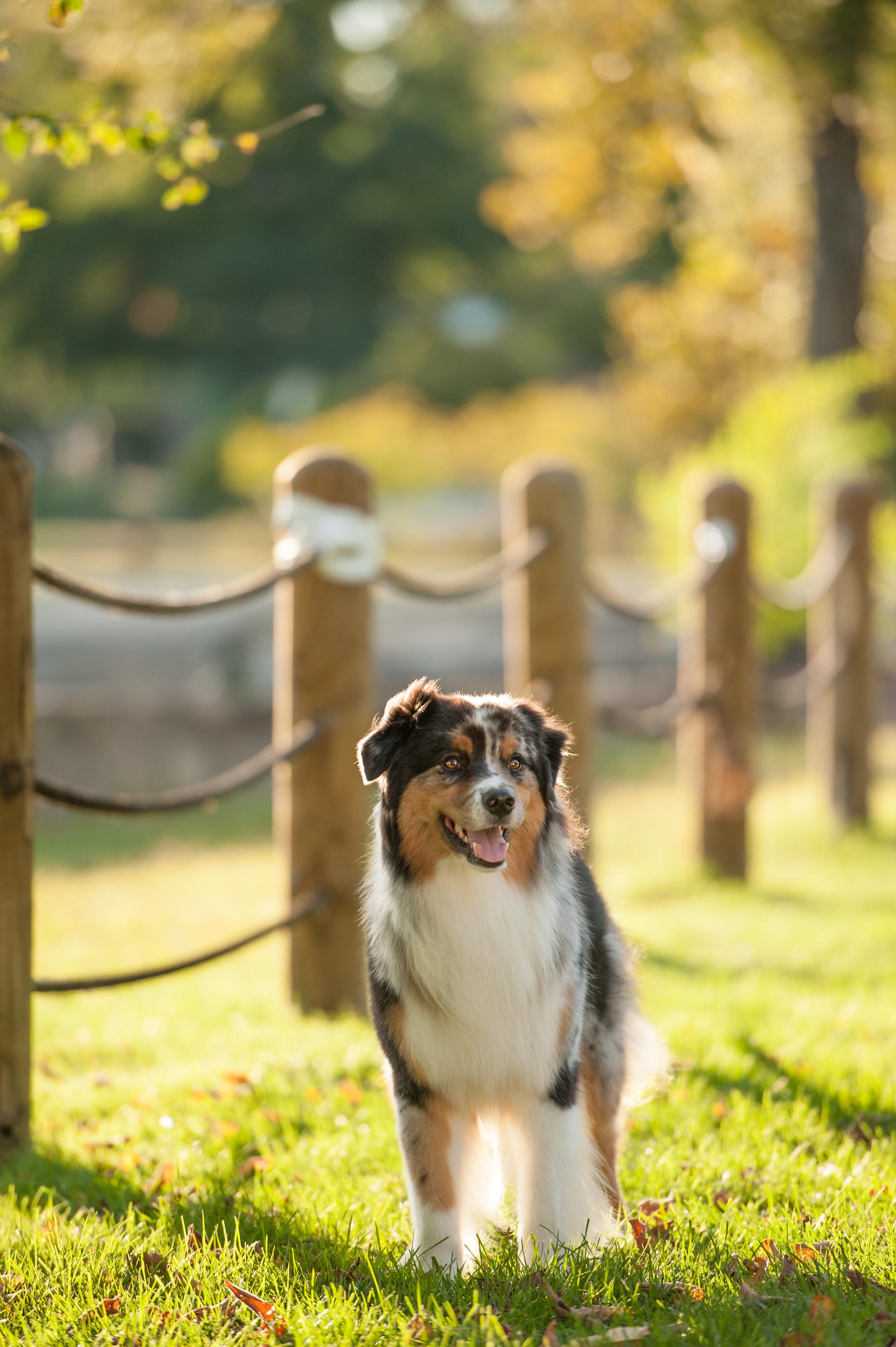 austin dog photographer (1 of 1)-3.JPG